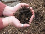 Arbor Mulch